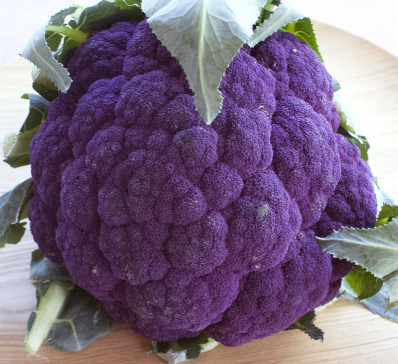purple cauli 2