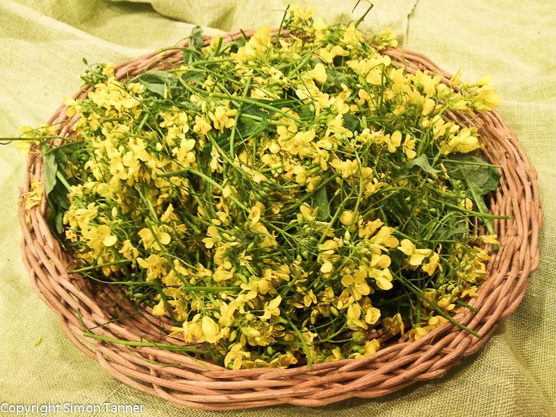fiori senape